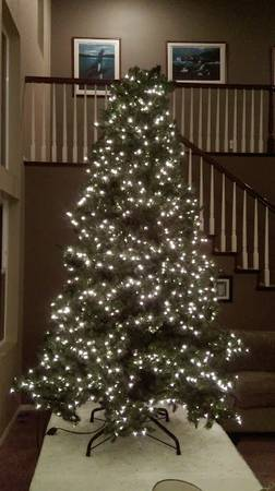 post 146 tree 1