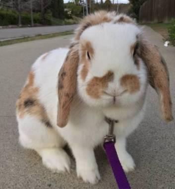 post 215 bunny 2