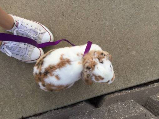 post 215 bunny