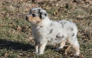 post 247 pup