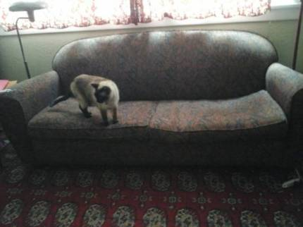post-287-couch-with-cat