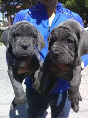 post 354 puppy 2