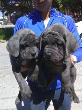 post 354 puppy 3