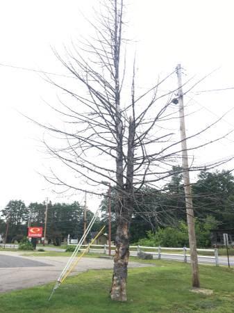 post 401 tree