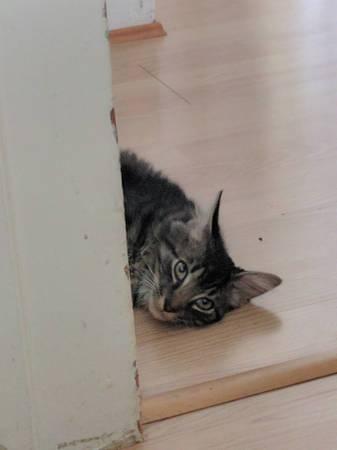 post 411 cat 1