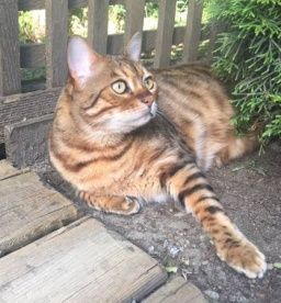 post 446 cat 2