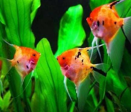post 520 fish