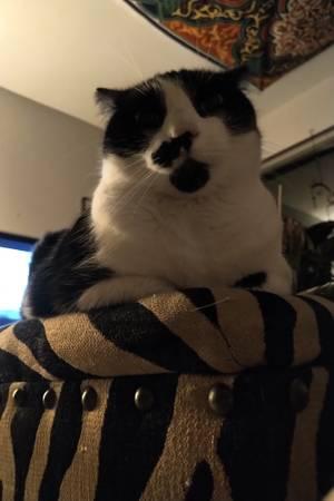 post 620 cat 2