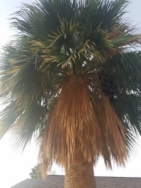 post 646 tree 3