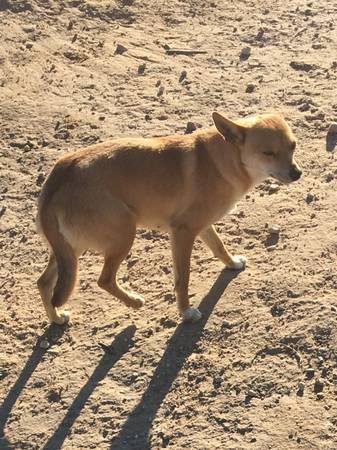 female dog 2