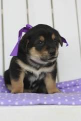 post 676 puppy 1
