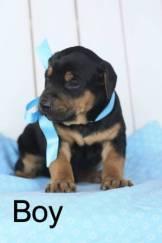 post 676 puppy 2