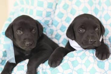 post 676 puppy 3