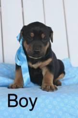 post 676 puppy 4