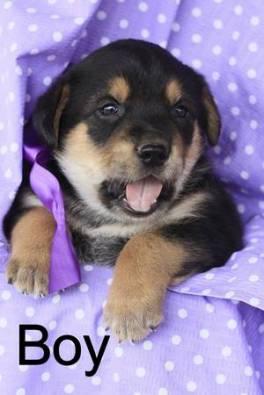 post 676 puppy 6