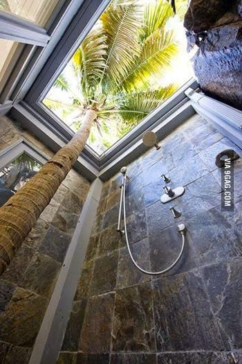 post 700 palm tree