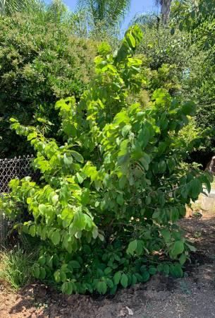 post 727 tree.jpg