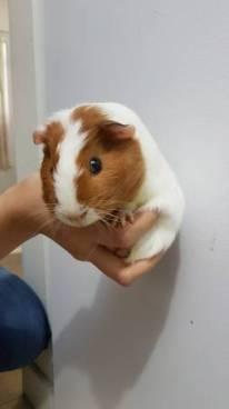 post 759 pig 5