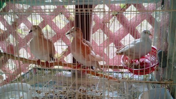 post 790 birds
