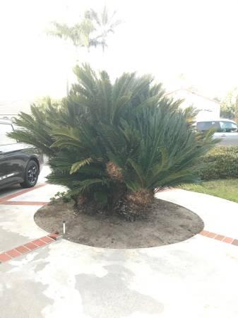 post 792 tree 1