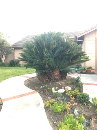 post 792 tree 2