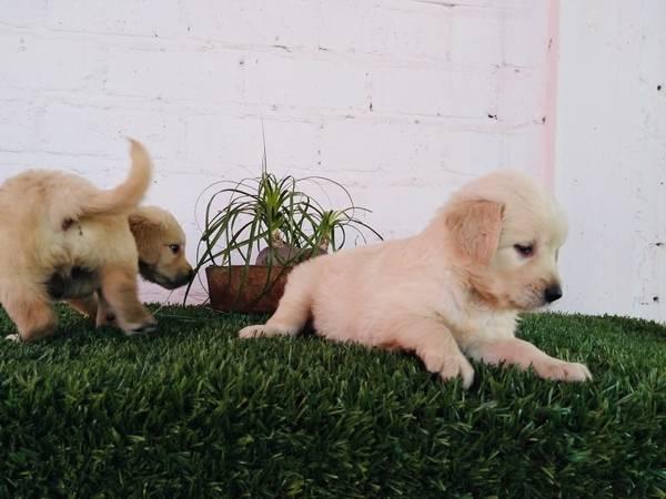 post 802 puppie.jpg