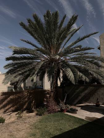 post 821 palm tree.jpg