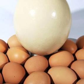 post 824 egg 2