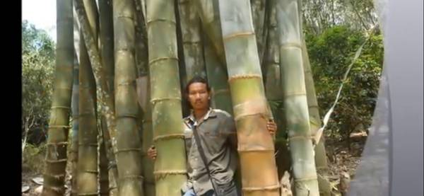 post 831 bamboo 3